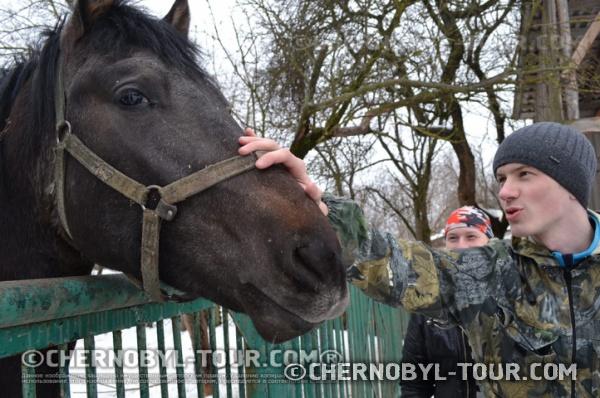 Лошадь в Чернобыле